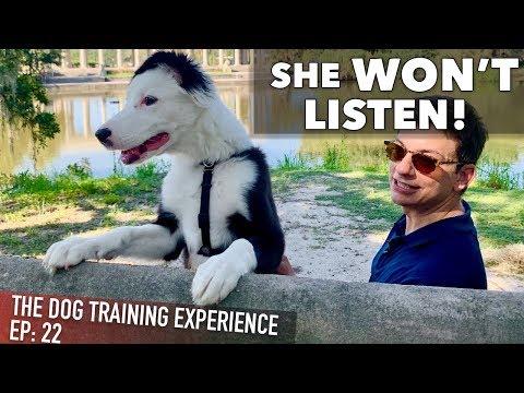 My Own Puppy Won't Listen To Me!