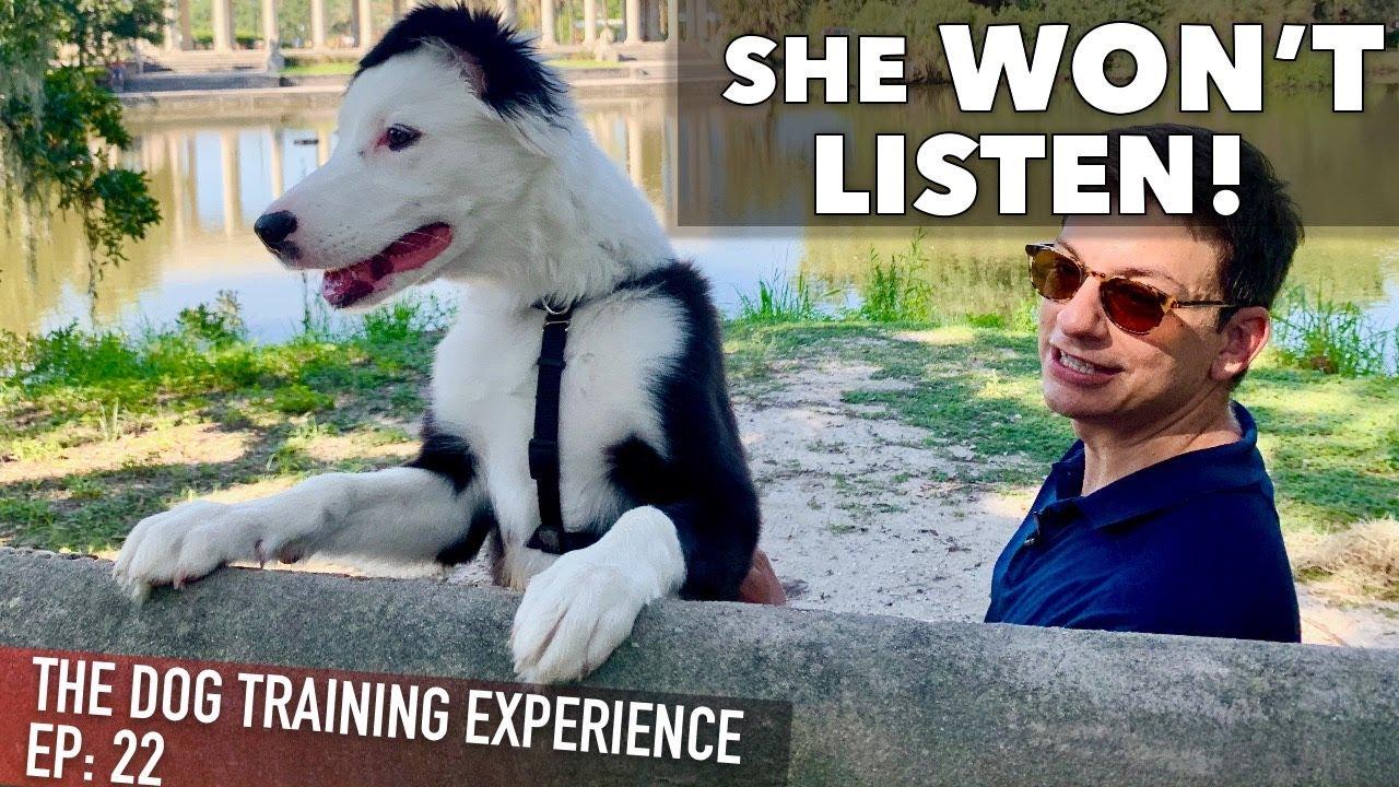My Own Puppy Won't Listen To Me! - YouTube