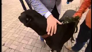 ТК Донбасс - Королевский дог и Евгений