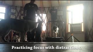 Focus Drills