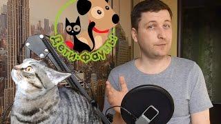 Чем лучше кормить собаку / кошку?