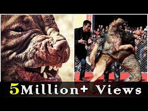 दुनियाँ का सबसे ताकतवर कुत्ता || World's Most Dengerous & Banned Dog Breeds
