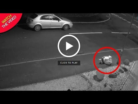 Hundreds Offer To Adopt Dog Snoop Cruelly Dumped In Road On CCTV Mp3