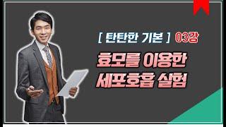 03강 효모의 세포호흡 실험│2021 생명과학Ⅰ 개념강…