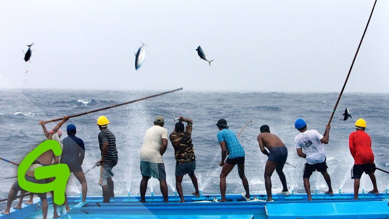 Catching tuna Maldivian style - YouTube