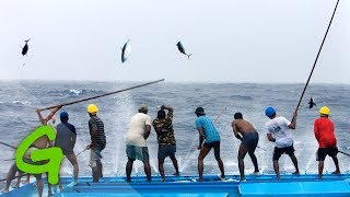 Repeat youtube video Catching tuna Maldivian style