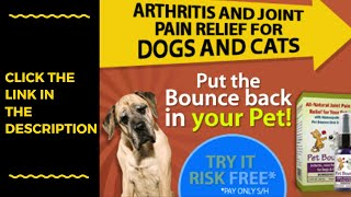 Joint health for dogs - dog ...