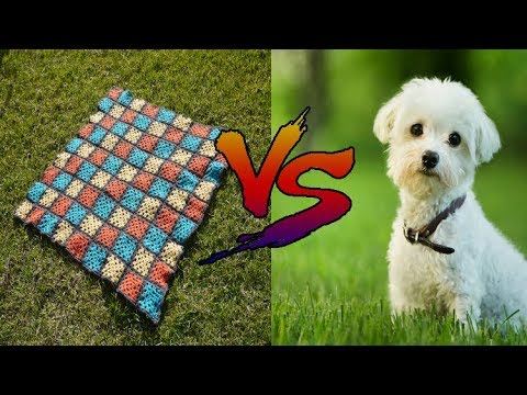Top 10 dogs react to magic tricks with blankets