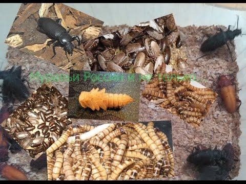 Муравьиная ферма(ant farm).