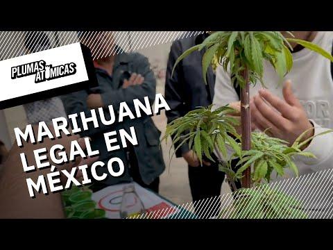 Plantón 4:20 - La farsa de la regulación mexicana del cannabis
