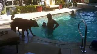 Dog Rescues Swimmer, Knpv Titled Malinois