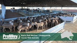 ProWay Sheepyards - Kerin Poll Merino - Yeoval NSW