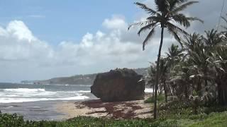 Barbados: Windy Hill 2/5/19