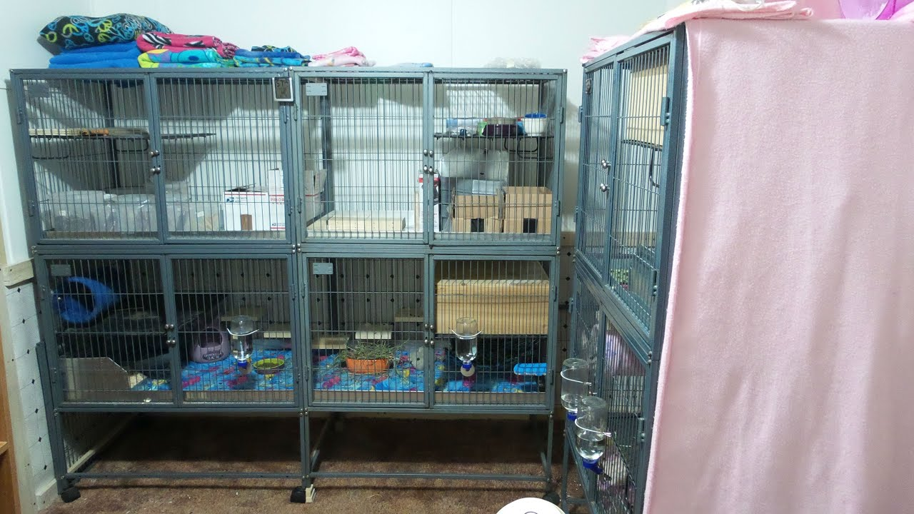 Creating A Double Double Wide Ferret Nation 142 Cage