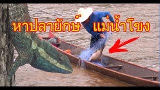 หาปลาย กษ แม น ำโขง เจอ mekong river big fish