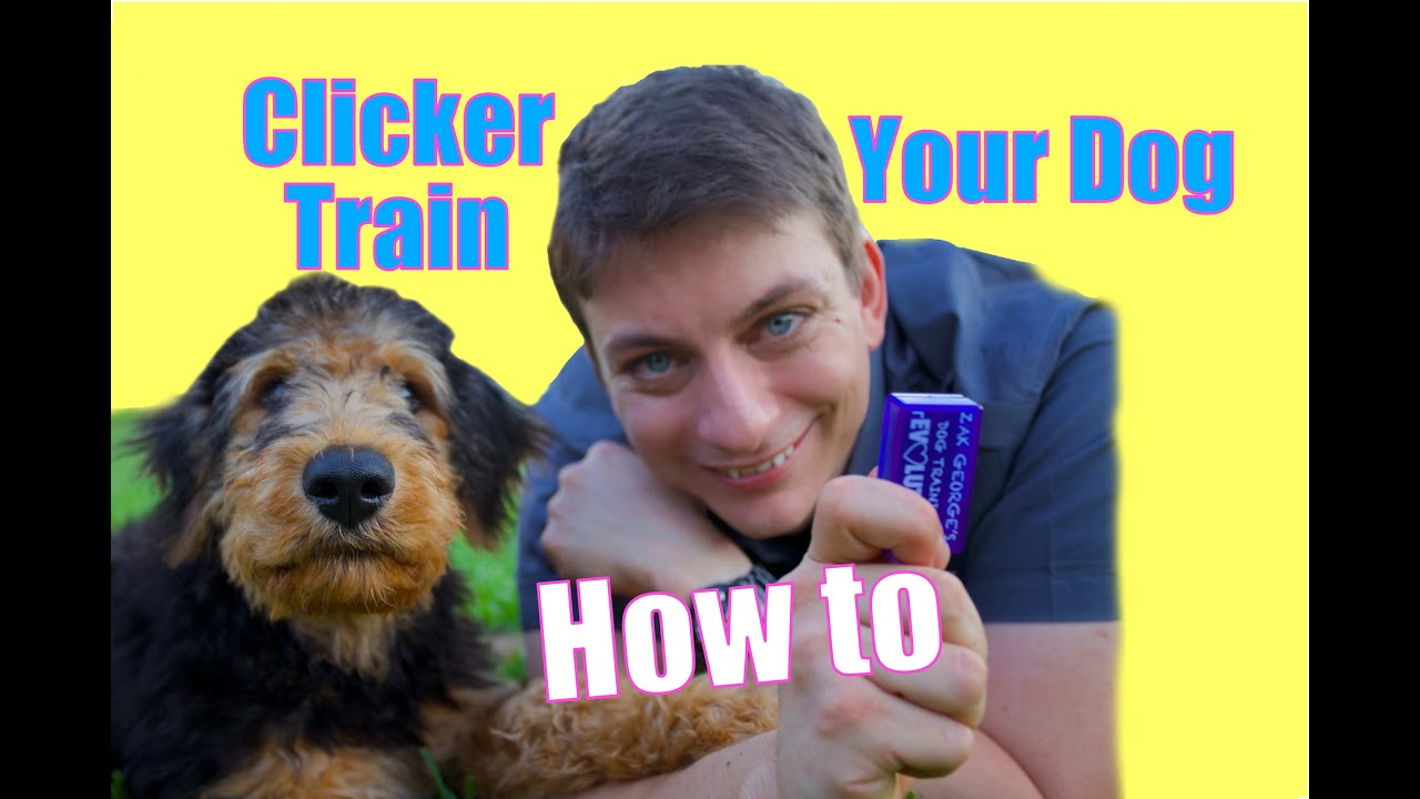 Youtube dog training