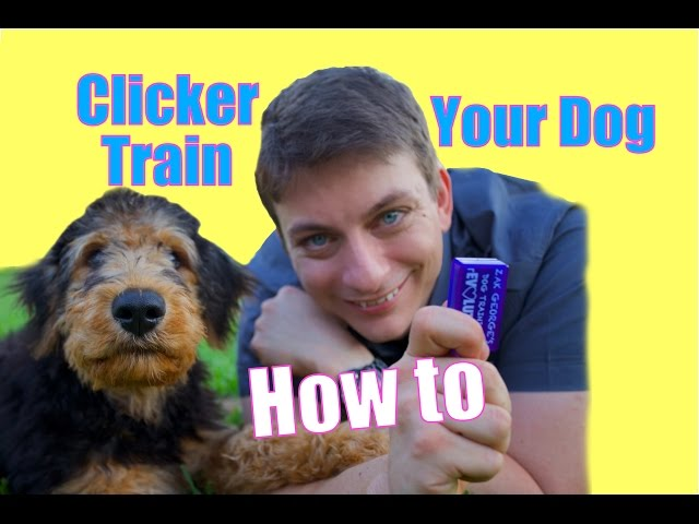 How to CLICKER TRAIN Your Dog: The FASTEST WAY to Teach your Dog to be AWESOME!
