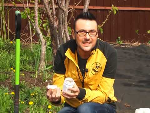 Салат (растение) - это... Что такое Салат (растение)?