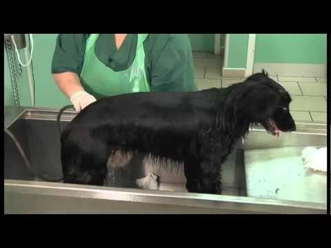 How To... Shampoo Your Dog
