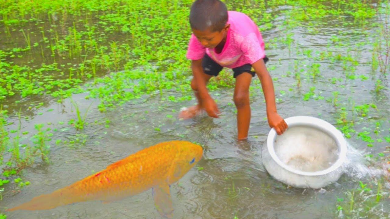 amazing  hand fishing - amazing  boy catching fish by hand - hand fishing from mud water