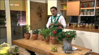 Saksıda Sebze Nasıl Yetiştirilir? - Erkan Şamcı ile Doğal Yaşam - TRT Avaz