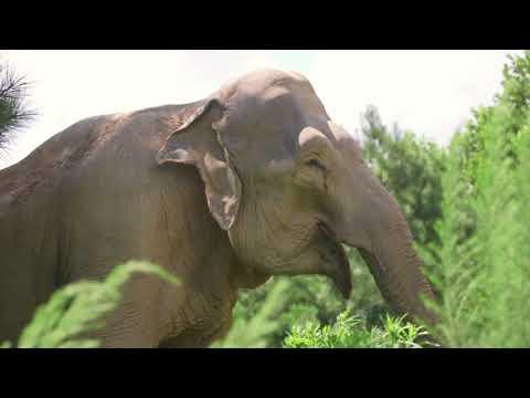 The Elephant Sanctuary | Start a CrowdRise Fundraiser Mp3