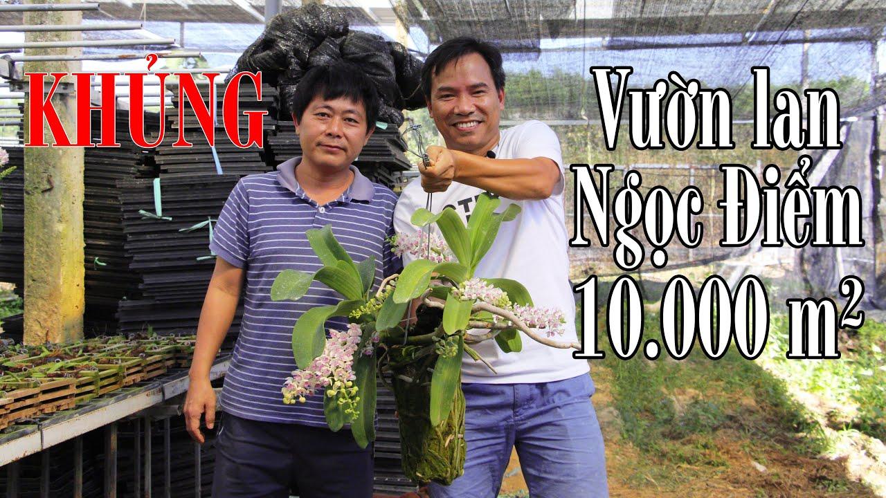 Vườn hoa lan ngọc điểm khủng tại Đồng Nai- big orchid farm of Rhynchostylis gigantea at Dong Nai