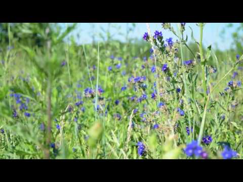 Relaxing video of Field Flowers and Bees [60fps]