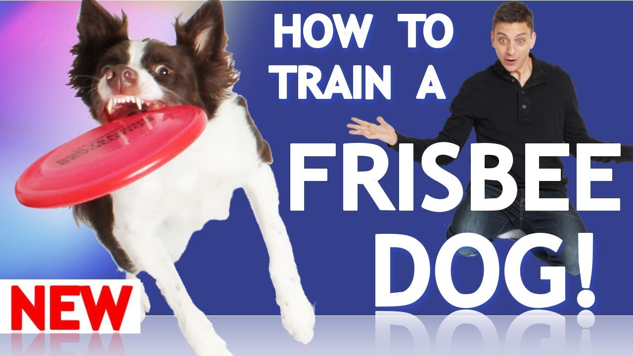 how to train a good dog