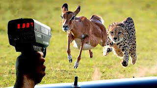 FASTEST Animals On Earth!
