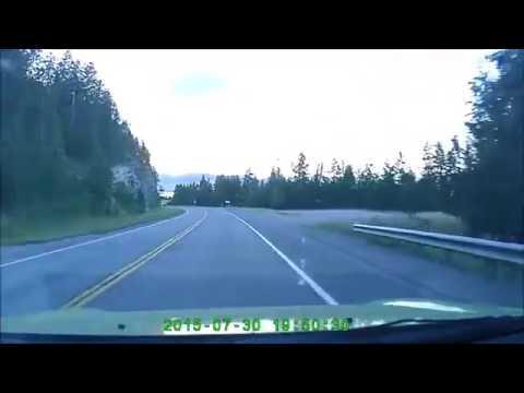 deer gets hit by