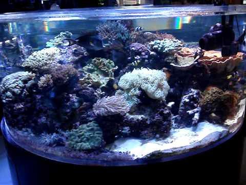 Manhattan aquariums local fish store youtube for Local fish store