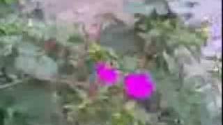 الاقامة الجامعية صومعة (1) البليدة