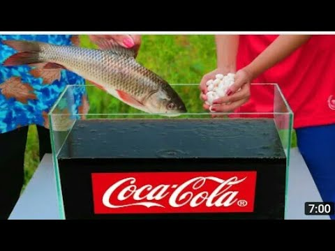 Эксперимент: Рыба против 1000 Ментос против Кока-Колы!