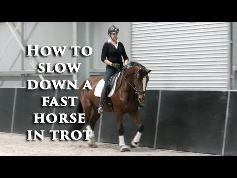 How to Slow Down the Fast Horse in Trot? - Dressage Mastery TV Ep 91