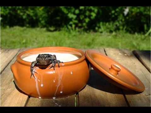 Две лягушки в кувшине , классическая версия