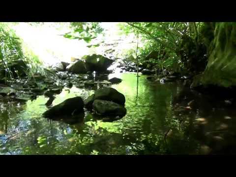 100% Relax Rivière Oiseaux Forêt Cascade (2h) Antistress