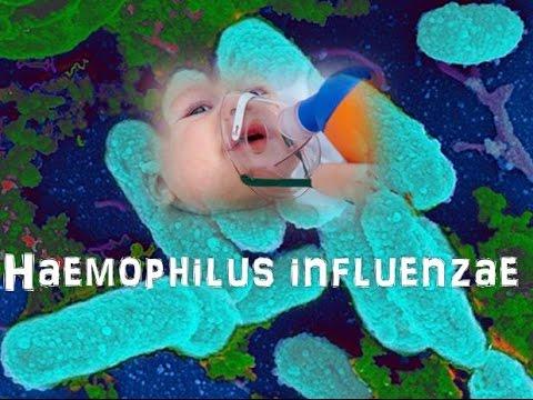Haemophilus influenzae - YouTube