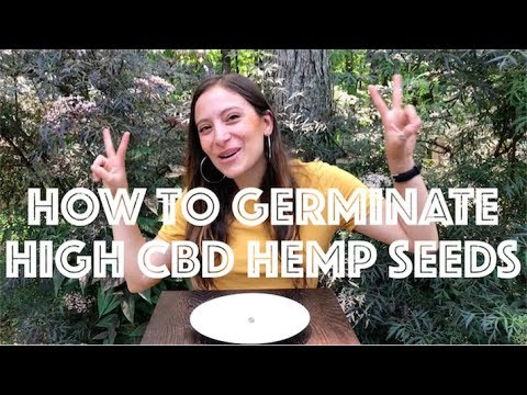How to Germinate a CBD Hemp Seed (Start Growing Cannabis from Seed)