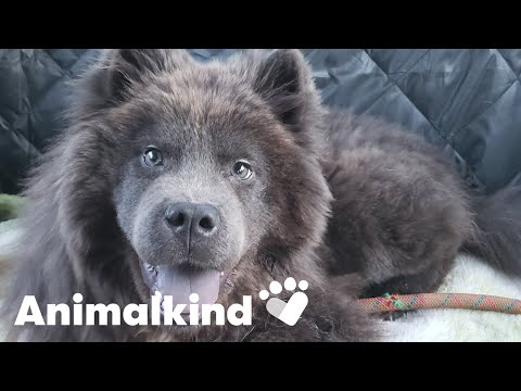 Puppy given second chance after trauma   Animalkind