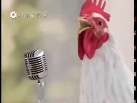 Lucu !!!Ayam menyanyi untuk Menyambut Tahun Baru Imlek 2017 ( shio ayam )