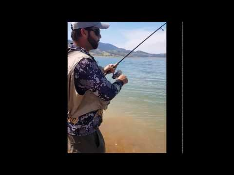 Murray cod on 4lb first cast at Blowering dam