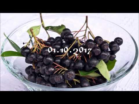Как засушить черноплодную рябину