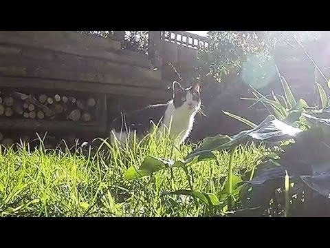 Cat walking on fence fail