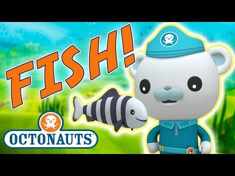 Octonauts - Learn about Fish   Cartoons for Kids   Underwater Sea Education