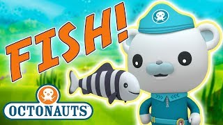 Octonauts - Learn about Fish | Cartoons for Kids | Underwater Sea Education