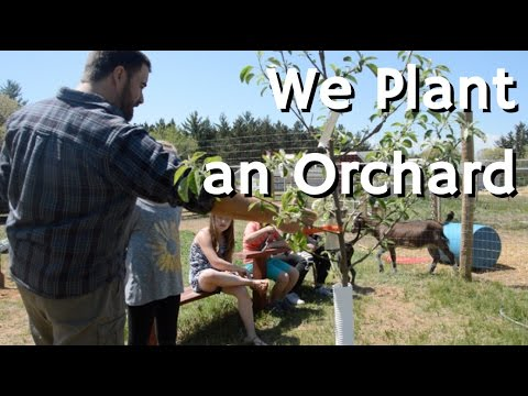 How to Plant a Fruit Tree Orchard | HomeSteadHow.com