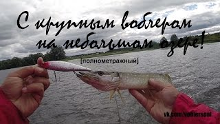 Ловля щуки осенью на воблер. Твичинг на озере. Видео отчет от 2.09.2015 г..