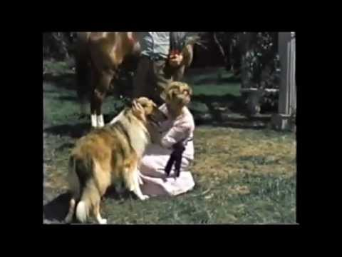 LAD A DOG ~ Movie 1962 (Preview Clip)
