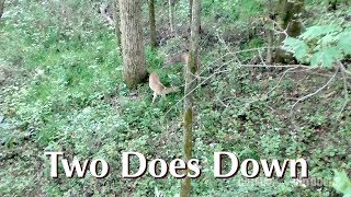 2017 Bow Season Public Land Whitetail Double Kill